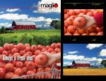 Maglio & Company